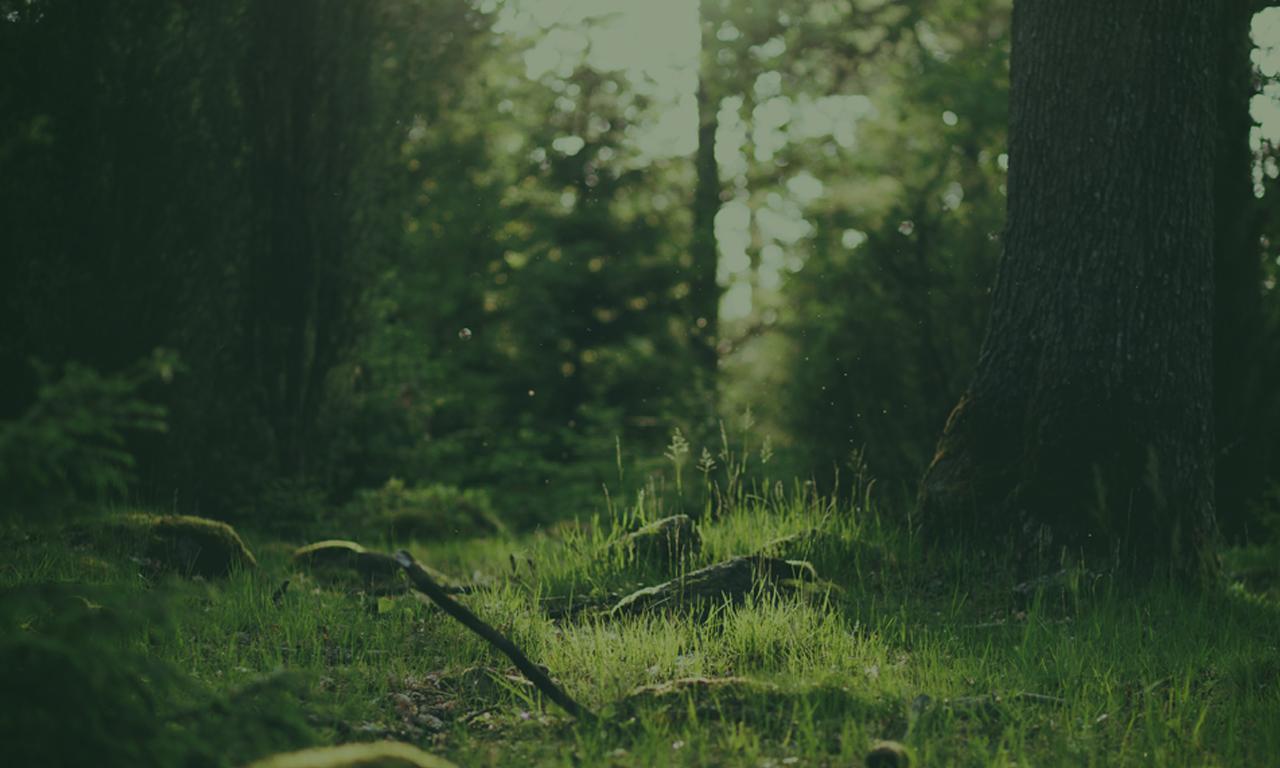 http://frodshamtreesolutions.com/wp-content/uploads/2014/08/GreenForest.jpg