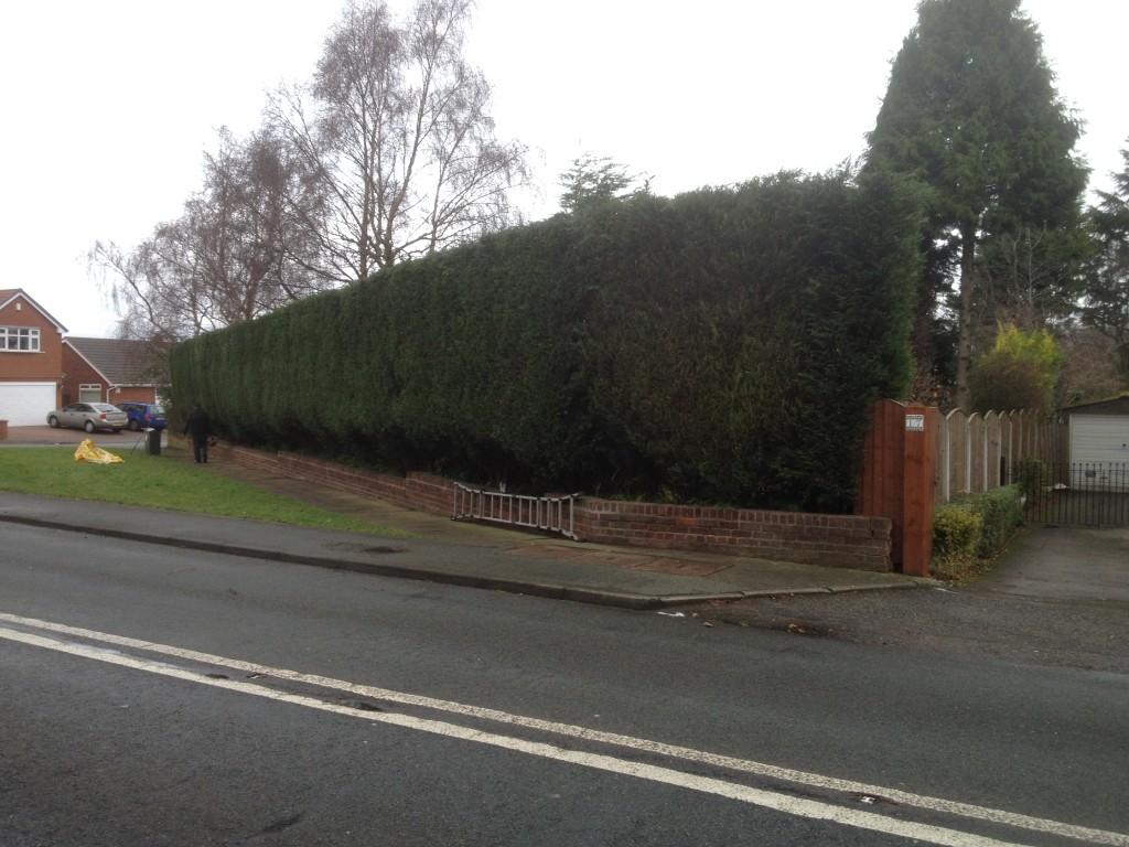 Trimmed Hedges2